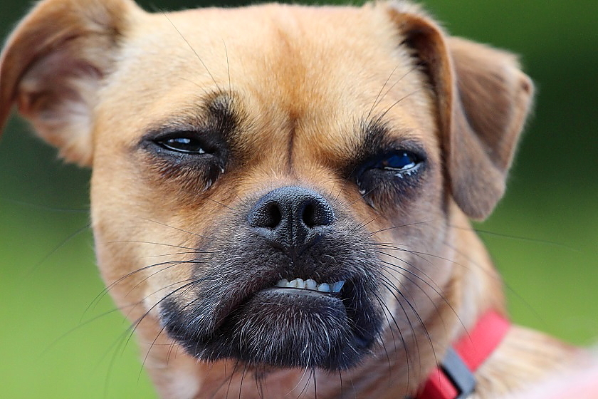 Tierfotos - Hunde - Hundefotos