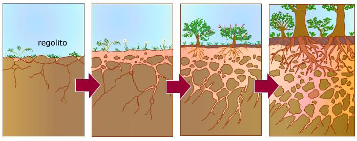5 cono tema 8 sesi n v el suelo for Formacion de los suelos