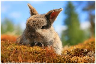 Cute bunny.