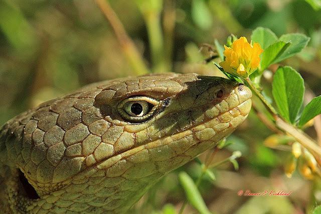 20. Lizard Posy by Dennis Kirkland