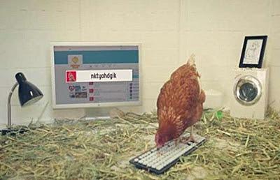 ayam twitter