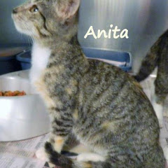URGENT Available 9/7 Fri 8am KITTEN female DSH mix ~ est. 4month. Nash County Animal Control