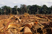penebangan-liar-atau-illegal-logging