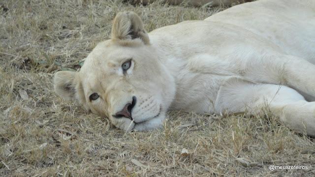 Lion Park - Johannesburg