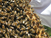 First Year Beekeeping