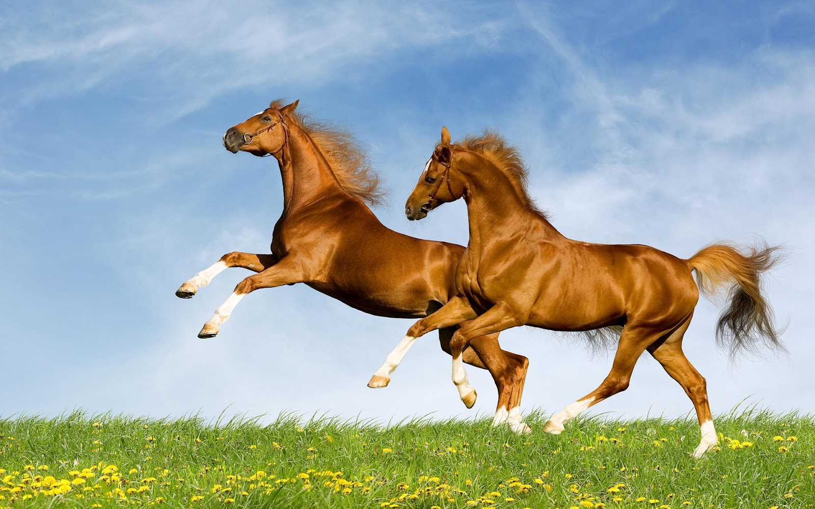 Great   Wallpaper Horse Lightning - horse+wallpapers+hd+(11)  Perfect Image Reference_95839.jpg