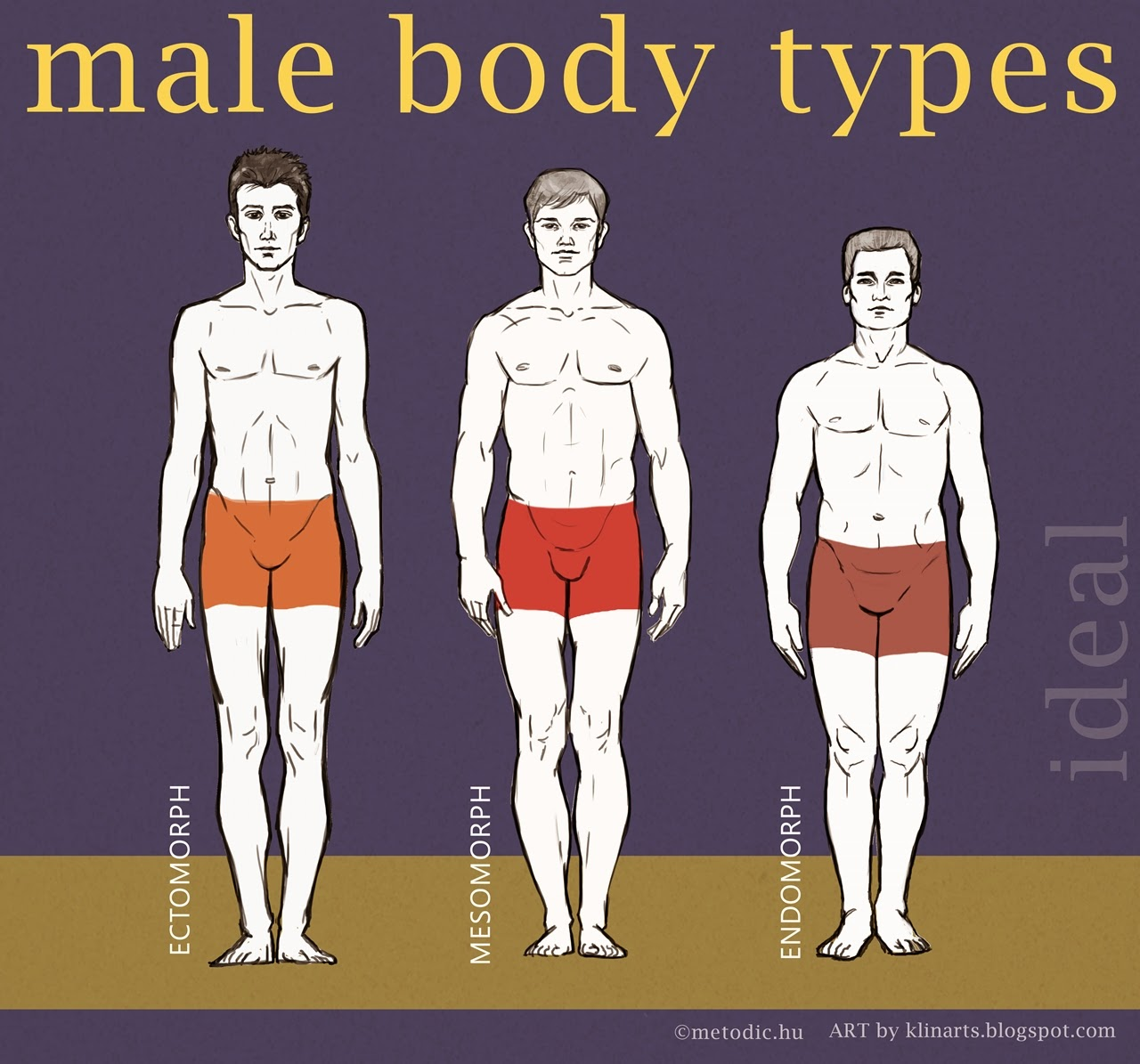In shape mens body types