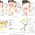 Anatomia e Fisioterapia na ATM