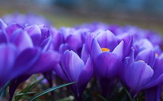 Gambar bunga untuk diwarnai