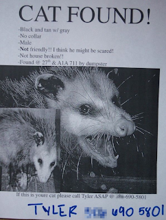funny missing cat possum poster flier