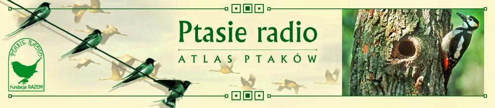 http://fundacjarazem.org.pl/ptasieradio/atlas.html