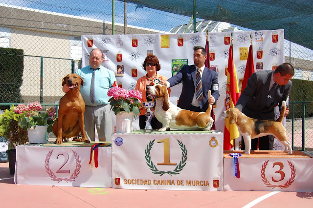 Inter. Multi. Ch. Aresvuma Ha-Shah, 2º Mejor de Grupo Cieza 2013.