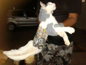 Gato é pego entrando em presídio com serras e celular