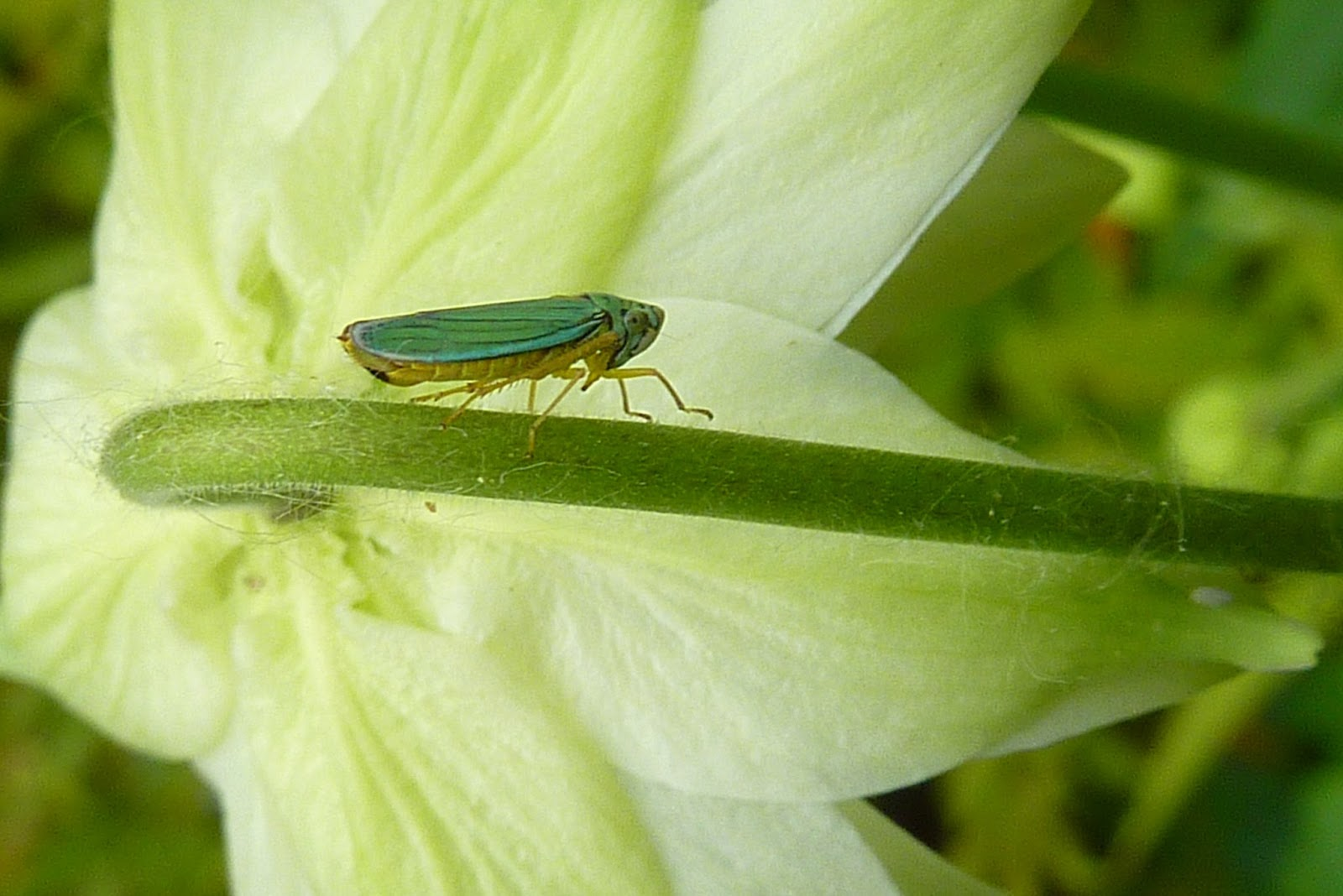 How to Take Care of a Katydid Insect forecast