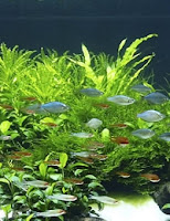 Ryby akwariowe i bezpieczeństwo akwarium