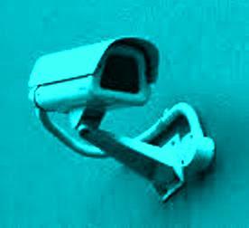 Pencuri Burung Mahal Beraksi Lagi, Kamera CCTV Solusinya