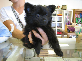 ... looks just like a tiny teddy bear. We hope to see her back again soon