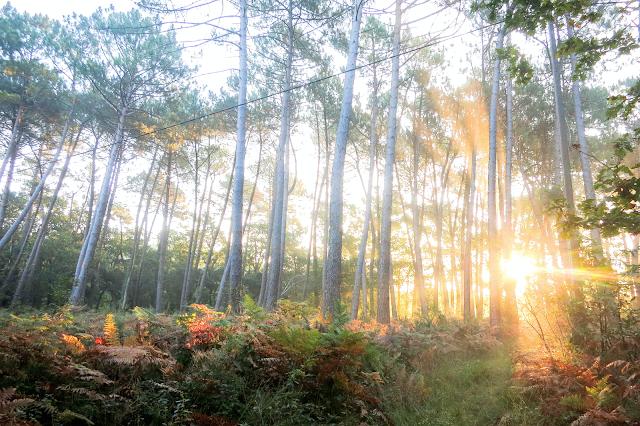 les landes,forêt,hossegor,sunday,the mood,indian summer