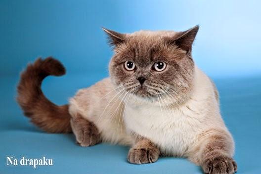 Czy kota trzeba kąpać?