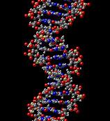 DNA - por Theflyoverzone