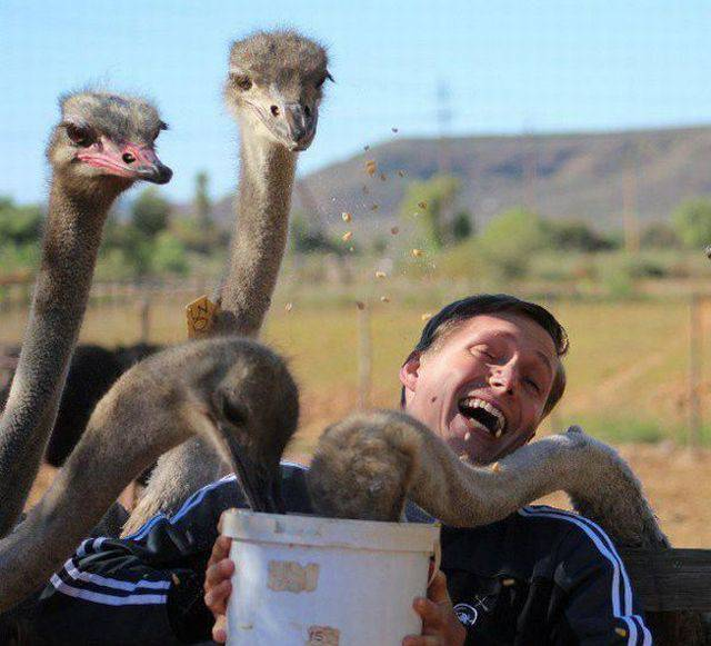 Hungry Ostriches