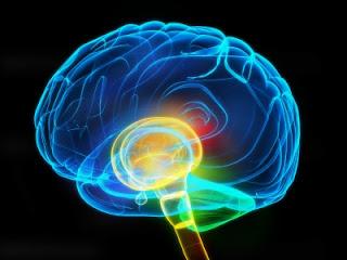 7 Penyebab Kinerja Otak Lemot