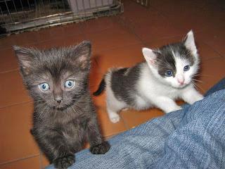 Fundacja Agapeanimali, para kociaków