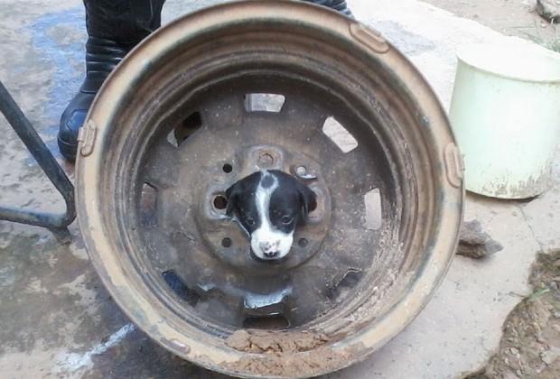 Cristalina Notícias - Filhote de cachorro fica preso em roda de carro