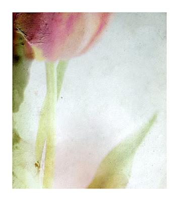 Jetty Kolobaric - Tulip Melancholy