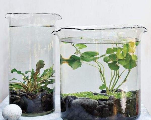 Flores e jardins plantas jardinagem e paisagismo plantas - Plantas de agua para interiores ...