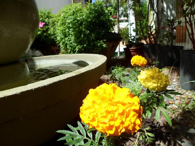 meu jardim - flor amarela e fonte