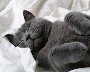 Black Cat HD Desktop Backgrounds