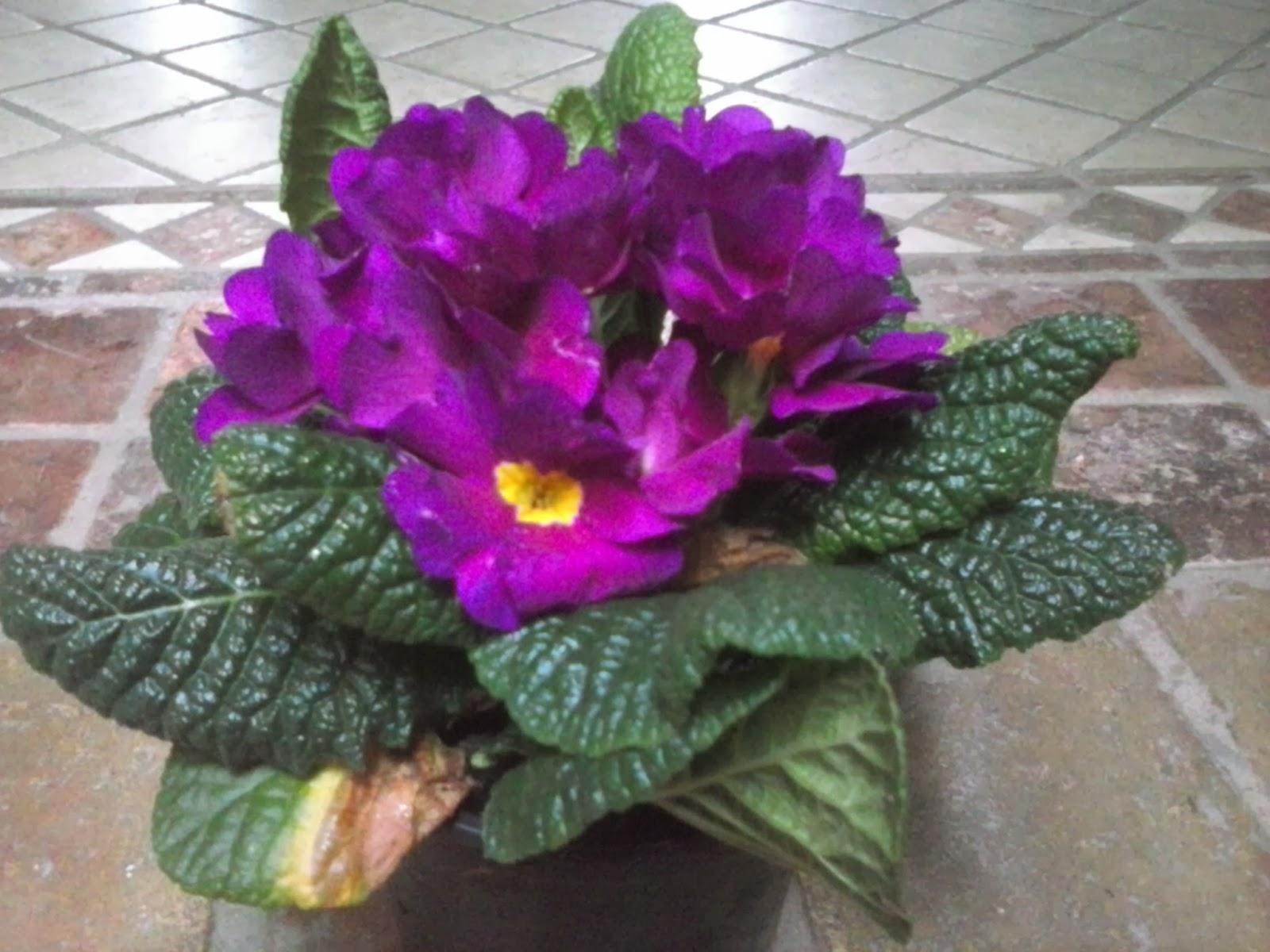 5 Flores para colorear tu jardín durante el otoño Revista  - Fotos De Flores De Invierno Para Jardin