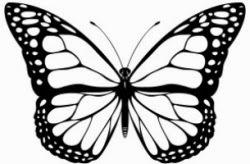 Łowca motyli