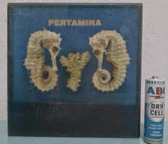Pajangan Pertamina Logo Lama Dgn Kuda Laut Asli Rp275.000