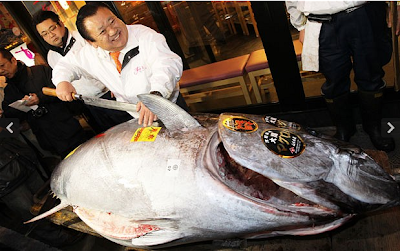 monster fish bluefin tuna