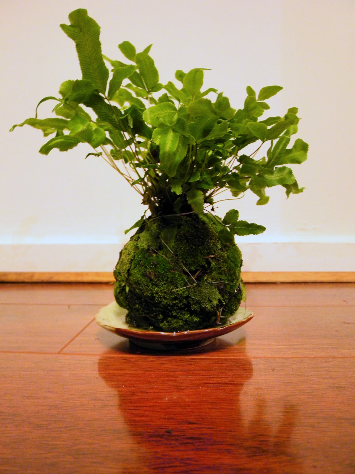mel miller  kokedama  the japanese moss ball