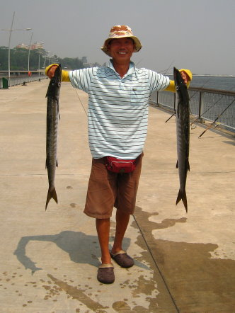 Yellowtail Barracuda [Sphyraena Flavicauda] also know as Saw Kun 沙君 [Hokkien] or Ikan Kacang [malay] weighing 4kg plus caught by Ah Wong at Woodland Jetty on 27th June 2013 using live Five-spot Herring or Assam fish (local), Selangat (malay) on float.