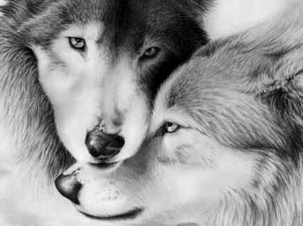 El lobo: otra obra mía | Glogster EDU - 21st century multimedia ...