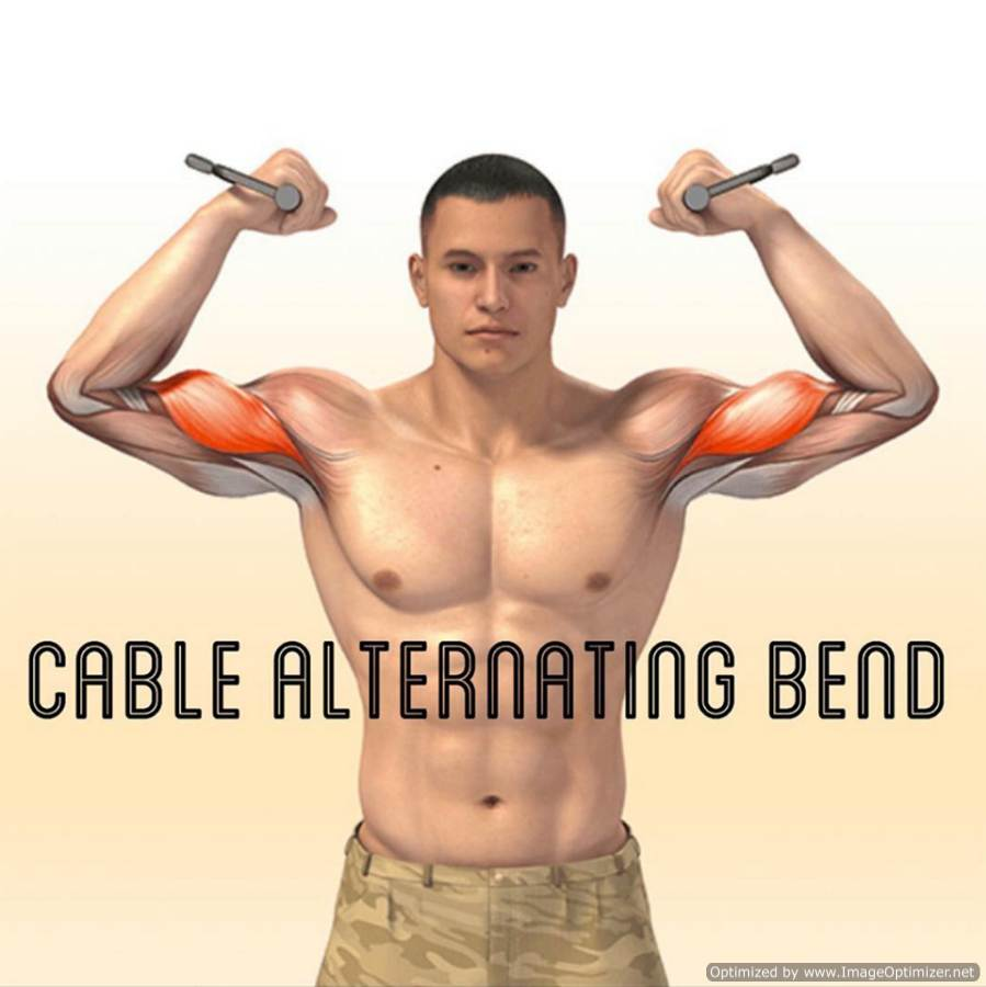 Bicep anatomy bodybuilding