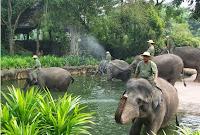 singapore zoo, kebung binatang singapura, Singapore Zoological Gardens, Mandai Zoo, wisata di singapore, bermain bersama gajah