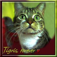 Tigris  RIP