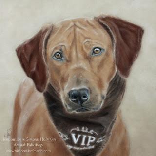 Hundeportrait malen lassen: Rhodesian Ridgeback Akila, Pastellkreide
