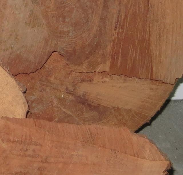 Pormenor de Corte de árvore metrosidero, árvore de fogo, mostrando os veios da madeira