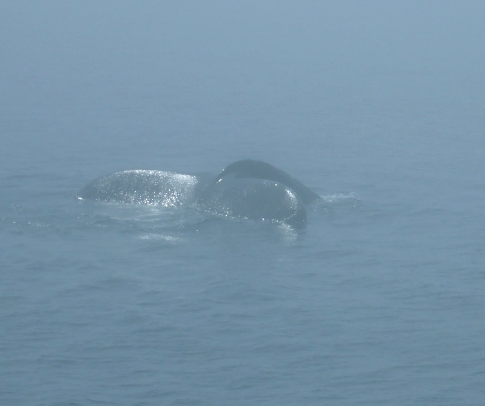 Whale Tail In the Fog