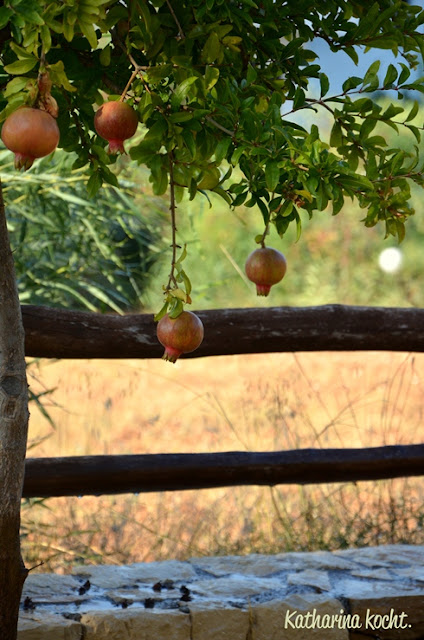 Granatapfelbaum Hotel-Kreta-Natur