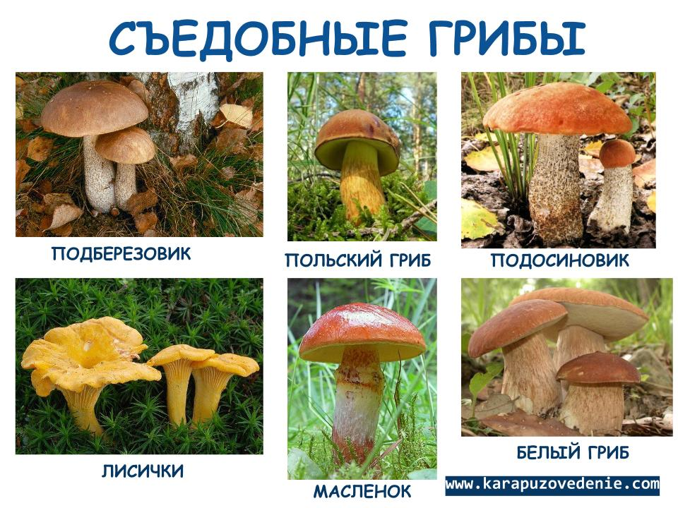 все несъедобные грибы фото и название от а до я