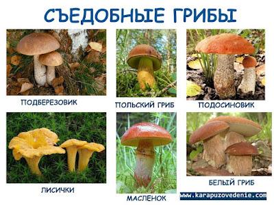 картинки фото грибов для детей съедобные