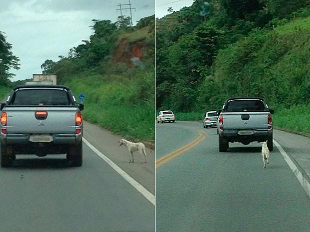 Dono joga cão de carro e bicho tenta segui-lo