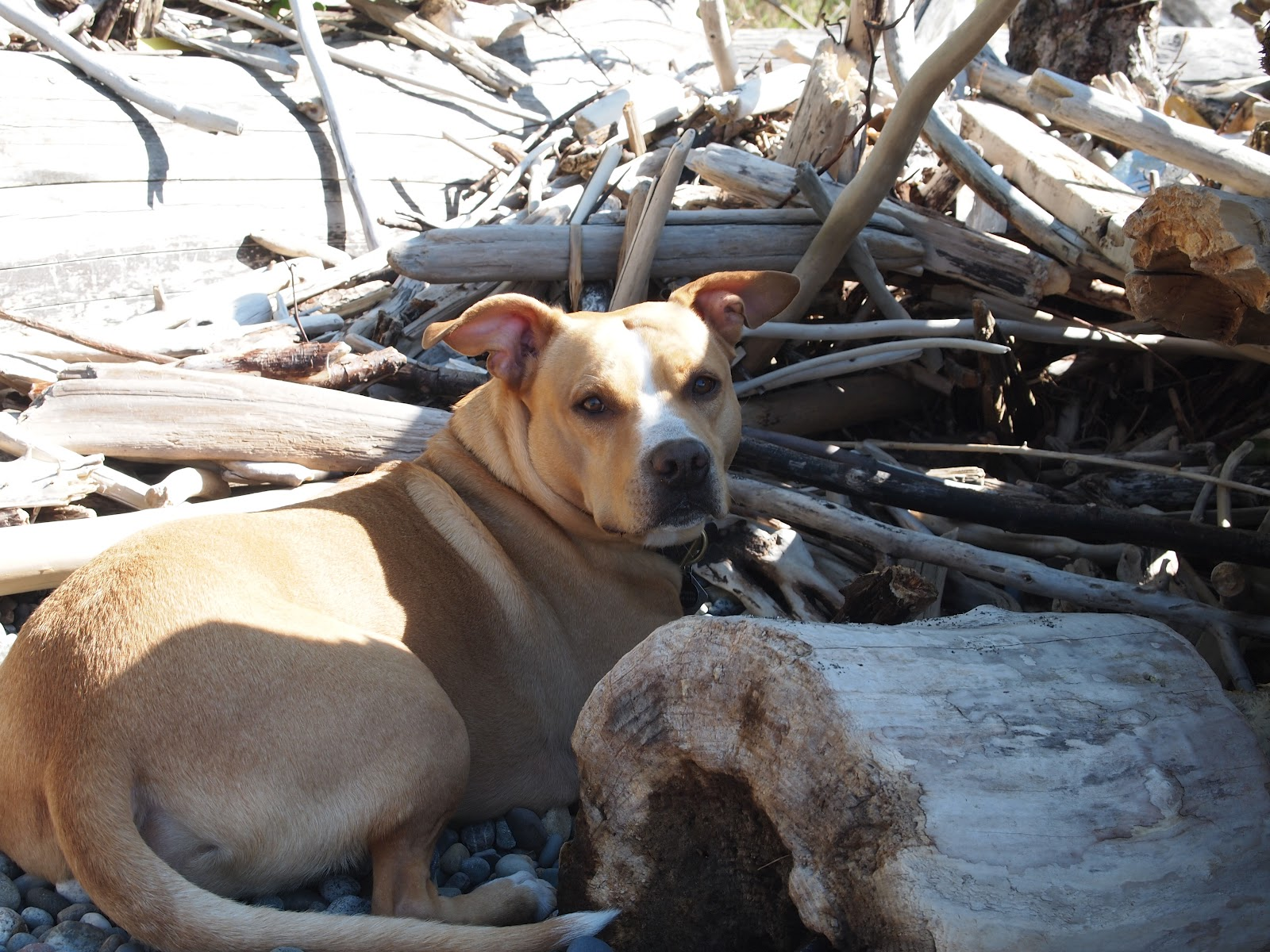 Can I Take An Esa Dog To A Beach